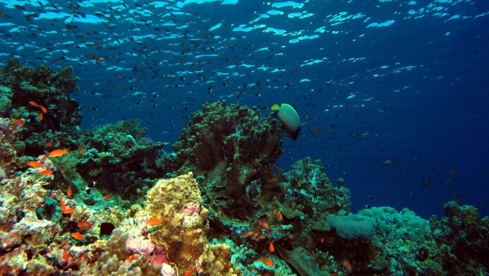 The Red Sea, Saudi Arabia